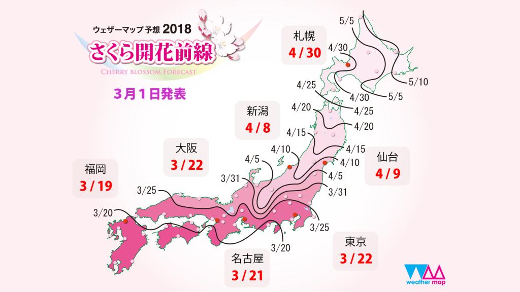 桜開花前線画像